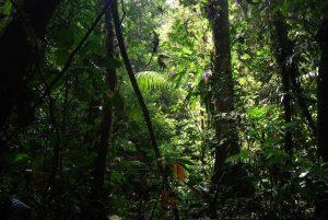 Groene bebossing in het Cuyabeno Wildlife Reserve in Ecuador