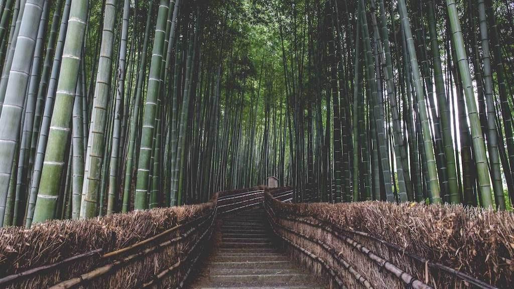 Arashiyama Bamboo bos in Kyoto, Japan