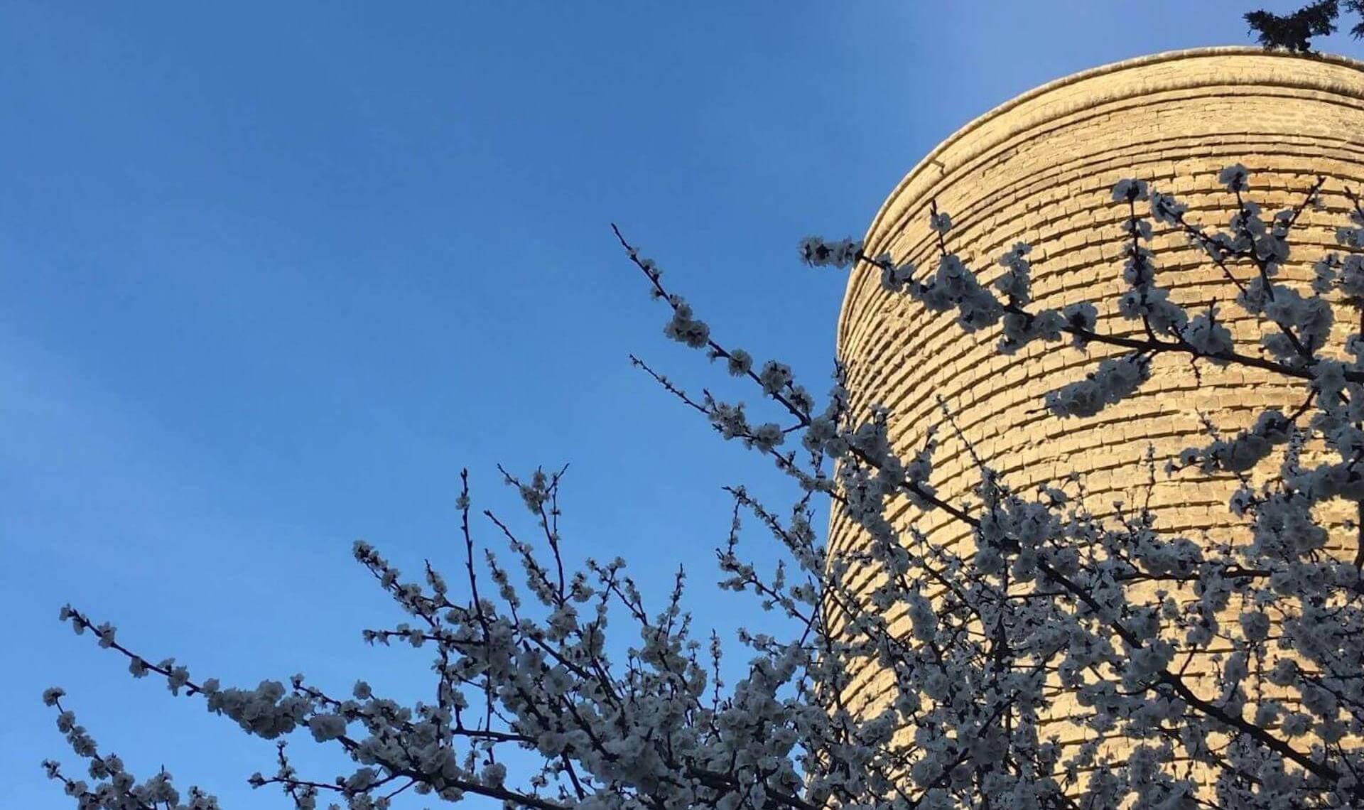 Bloemen naast de Qiz Qalasi, de maagdentoren in de oude stad van Bakoe in Azerbeidzjan