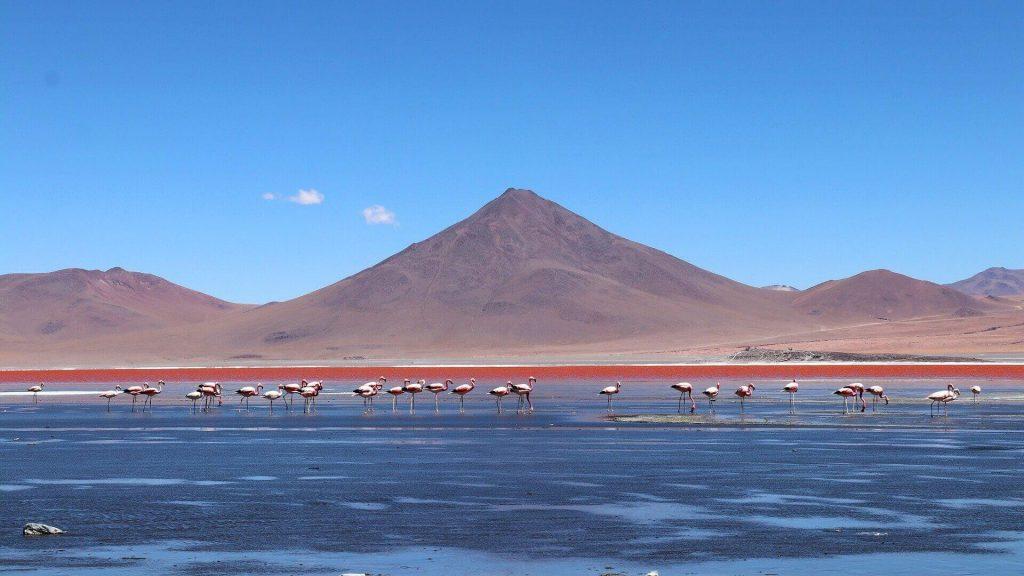 Flamingo's bij Laguna Colorada in de woestijn bij Uyuni in Bolivia