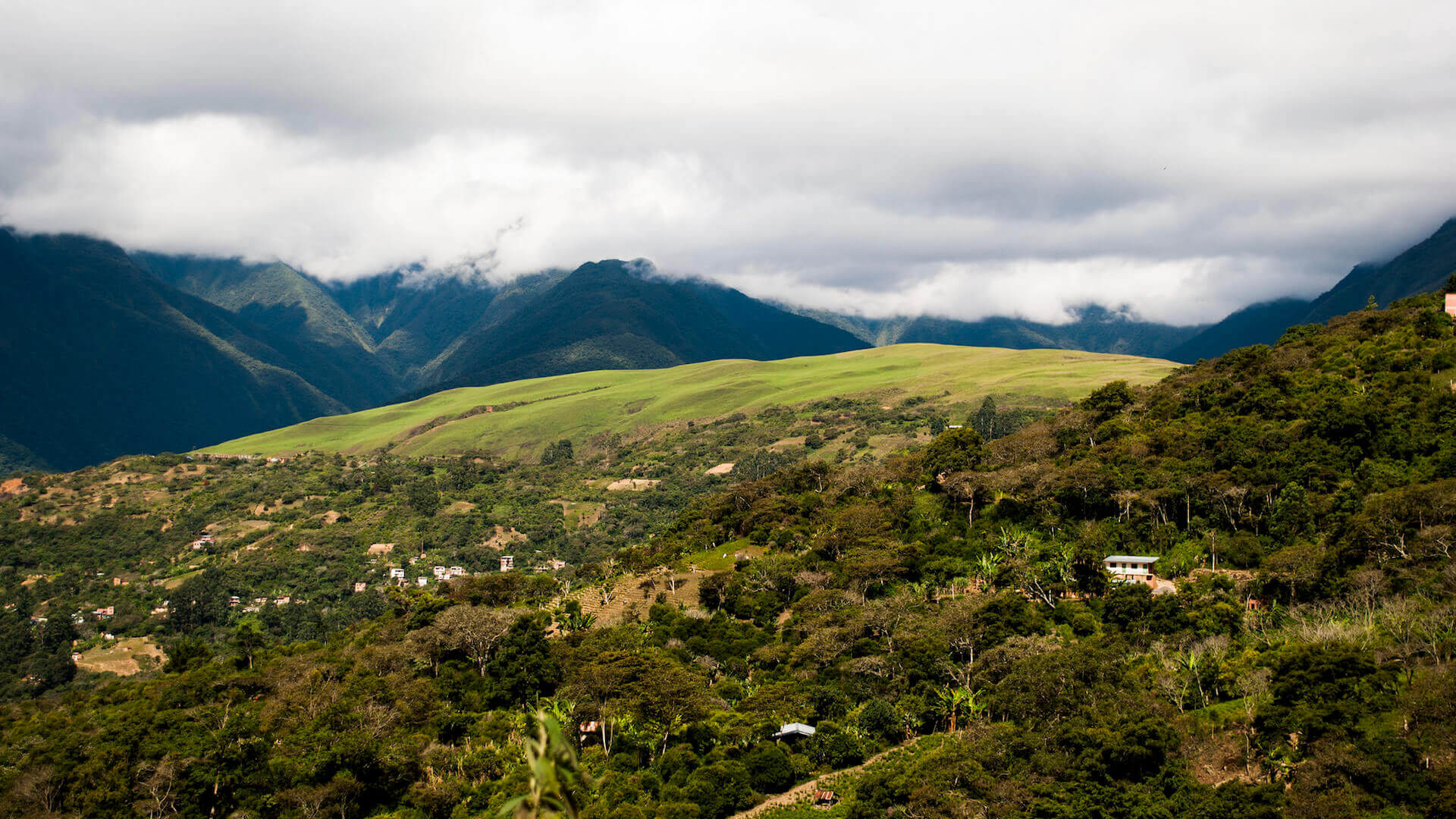 Groene heuvels bij Coroico in Bolivia