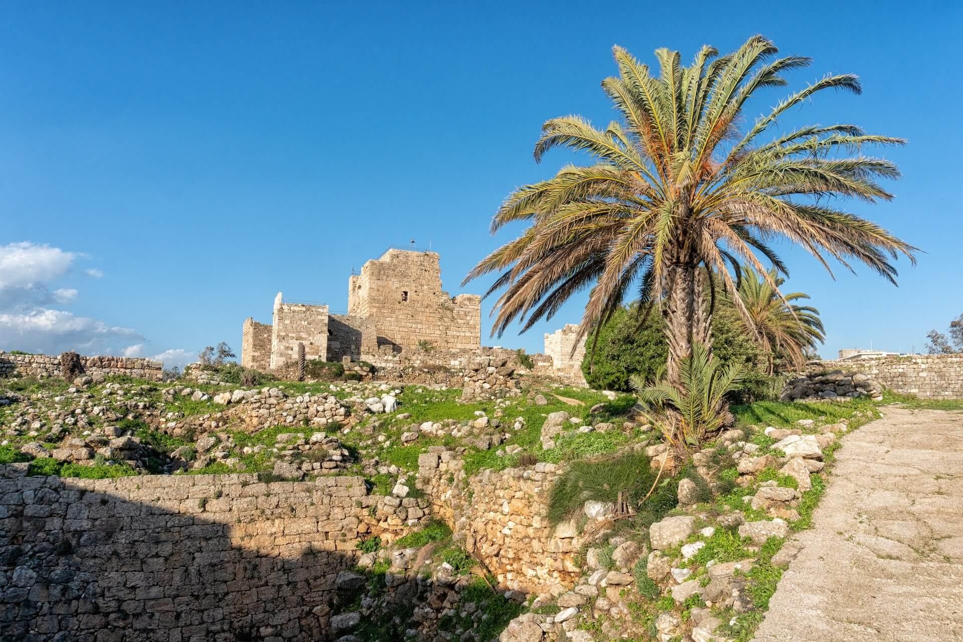 Palmboom en kasteelruine in Byblos